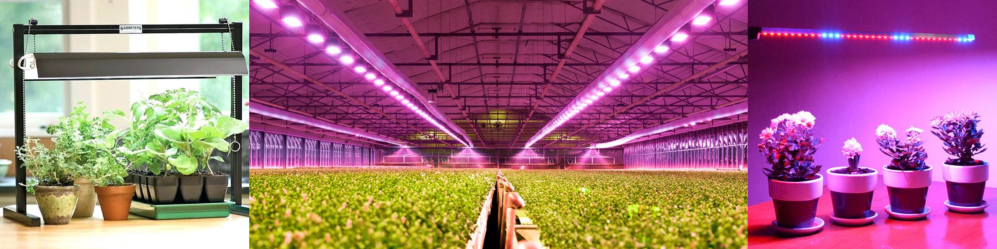 Cоздание правильного искусственного освещения для растений